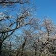 季節の花<桜・アレンジメント・ハナカイドウ>