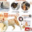 長崎市は、ネコがあふれる街だった