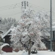 師走の大雪