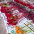 Let's make dried flowers