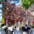 風早火事(ひのこと)祭り、 国津比古命神社の屋台練り