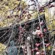 妙見寺の春