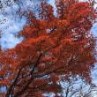 秋の大船山2017