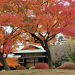 皇居東御苑(二の丸庭園の紅葉)