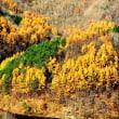晩秋の会津の風景 磐梯山 曲沢沼 大沢沼 土津神社の紅葉