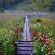 初秋の入笠湿原