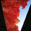 12月の彩り:岡山県総合グラウンド