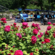 可児市「花フェスタ記念公園」のバラ園を