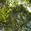 森林世界遺産