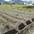 ここが稲を植えていた田んぼです。