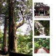 9/15,9/28限定!クアビオ発「榛名神社」参拝ツアーを開催します