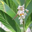 新木場 夢の島 熱帯植物園