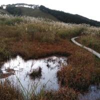 映画『ノルウェイの森』の舞台になった砥峰高原のすすきは素晴らしかった!