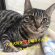 1月19日 譲渡会参加猫ちゃん紹介\(^o^)/