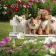 花に囲まれた5匹の可愛いお犬さま