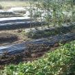 畑、そら豆の畝作り