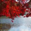宇都宮市内でモミジを観たい - 宇都宮市/栃木県中央公園 -