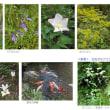 初秋の花 -名古屋・東山植物園-