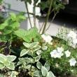 ブルーベリーの寄せ植え
