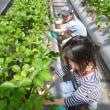 春のバス遠足in加賀フルーツランド