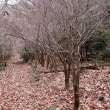 菖蒲谷森林公園散策