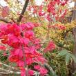 ☆2017-10-11 アヤメ平から尾瀬ヶ原の紅葉は~(^^♪
