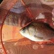 清遊湖に行ってきた。住宅ローン固定金利さん釣り教室