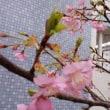 良いこと、悪いことは表裏一体。そして、河津桜に想いを託す。