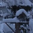 積雪43センチ  除雪の一日  ネズミ1匹捕獲