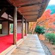 京都  高雄地区 台風乗り越え紅葉を