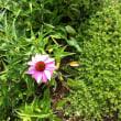 草花と季節のめぐりを楽しむ 【節気について 1】