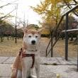 忠霊塔公園散歩