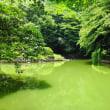 夏の三四郎池ー2