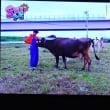 10/22 牛って可愛い 犬みたい これおまけの写真