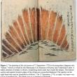 江戸時代の当時の日記分析し、史上最大の磁気嵐と報告!