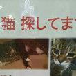 脱走猫の事...そしてTNRした子は迷子猫だった