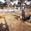 T公園散歩とエビスKEN