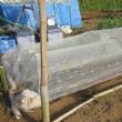 4月22日・トウモロコシの畝にエダマメ播種しました!