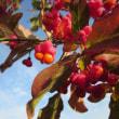 10月16日の誕生花は「ニシキギ」
