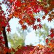 グリーンピア春日井の紅葉 その4