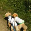 自然公園へお散歩