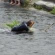 浅川あゆまつり