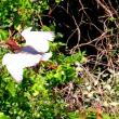 4/22探鳥記録写真(筑前大島鳥見行-12:アカガシラサギほか)