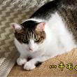 娘が撮った猫たちが気持ち悪すぎる件について☆