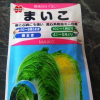ミニ白菜播種2018(一回目)