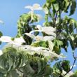 花彩々   五月晴れ