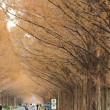 紅葉 ~ メタセコイア並木