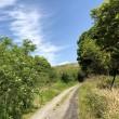 新緑の山道を散策する