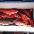 鮎供養を終え、沖釣りモードへ