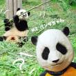 スクスク成長しているパンダさんに、名前をつけよう!